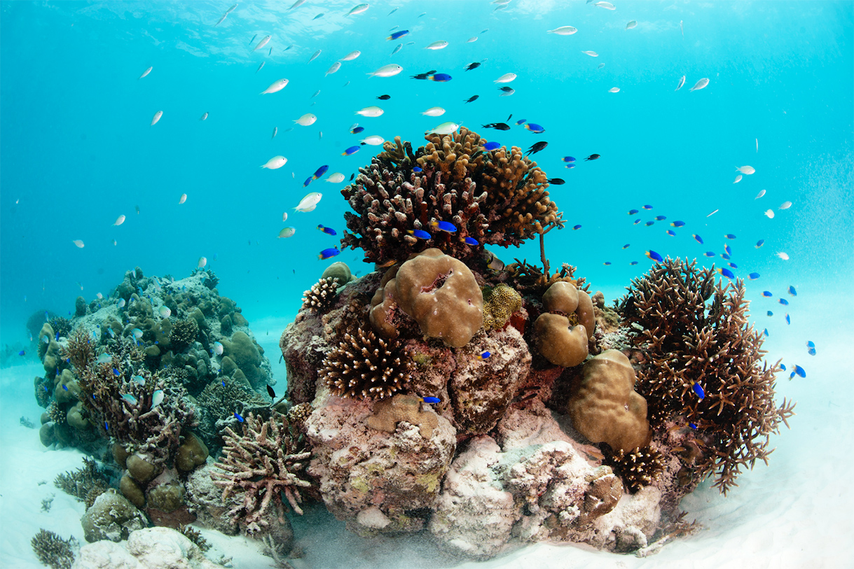 Seychelles is a tropical fish paradise