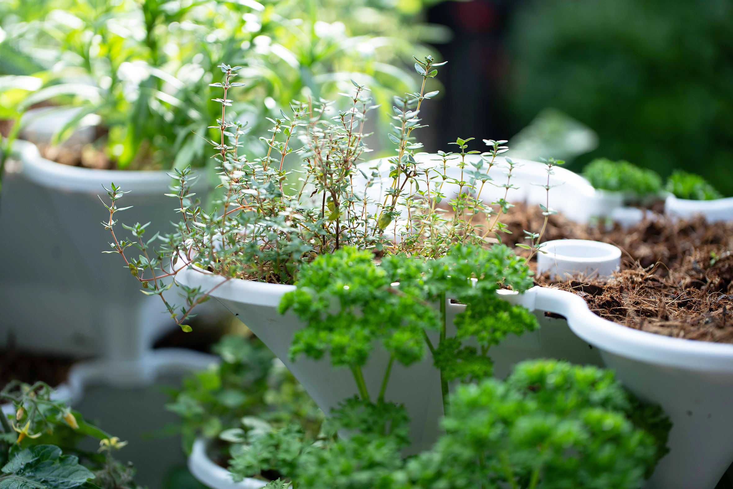 Acqua Tower is great for herbs
