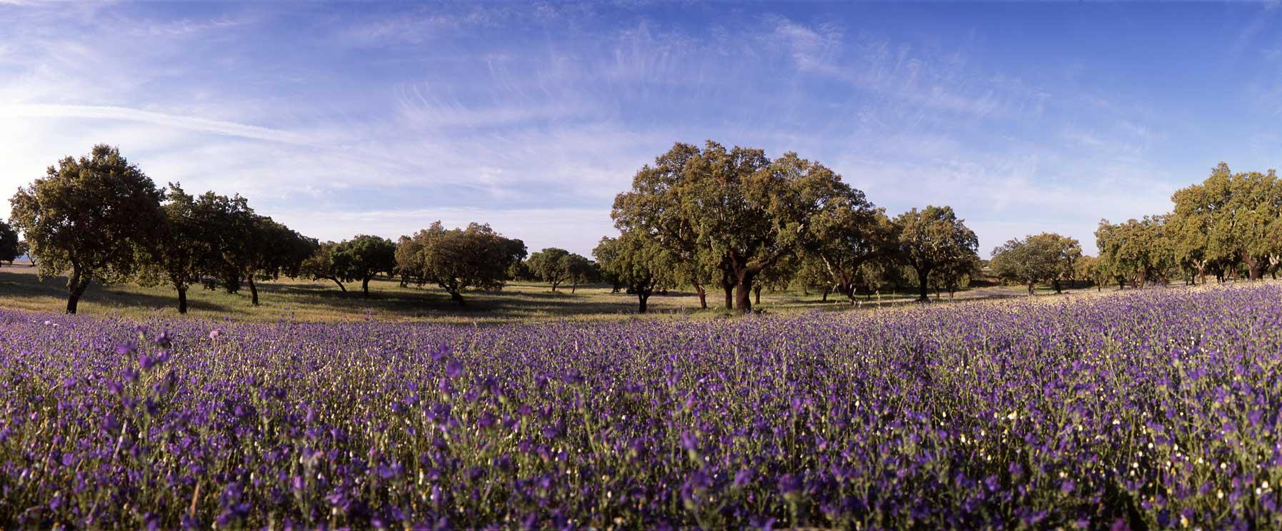 A cork oak forest in Portugal is rich in bio-diversity. Picture: Apcor