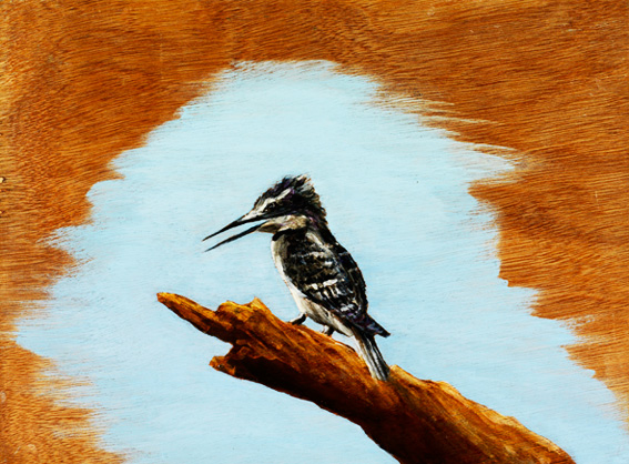 Pied Kingfisher on wood, 12x16 inches, by Sarah Elder
