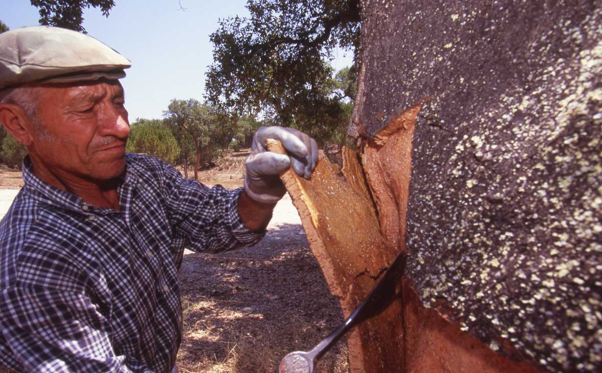The bark is stripped from the trees every 10 years, which means cork is a highly sustainable materia