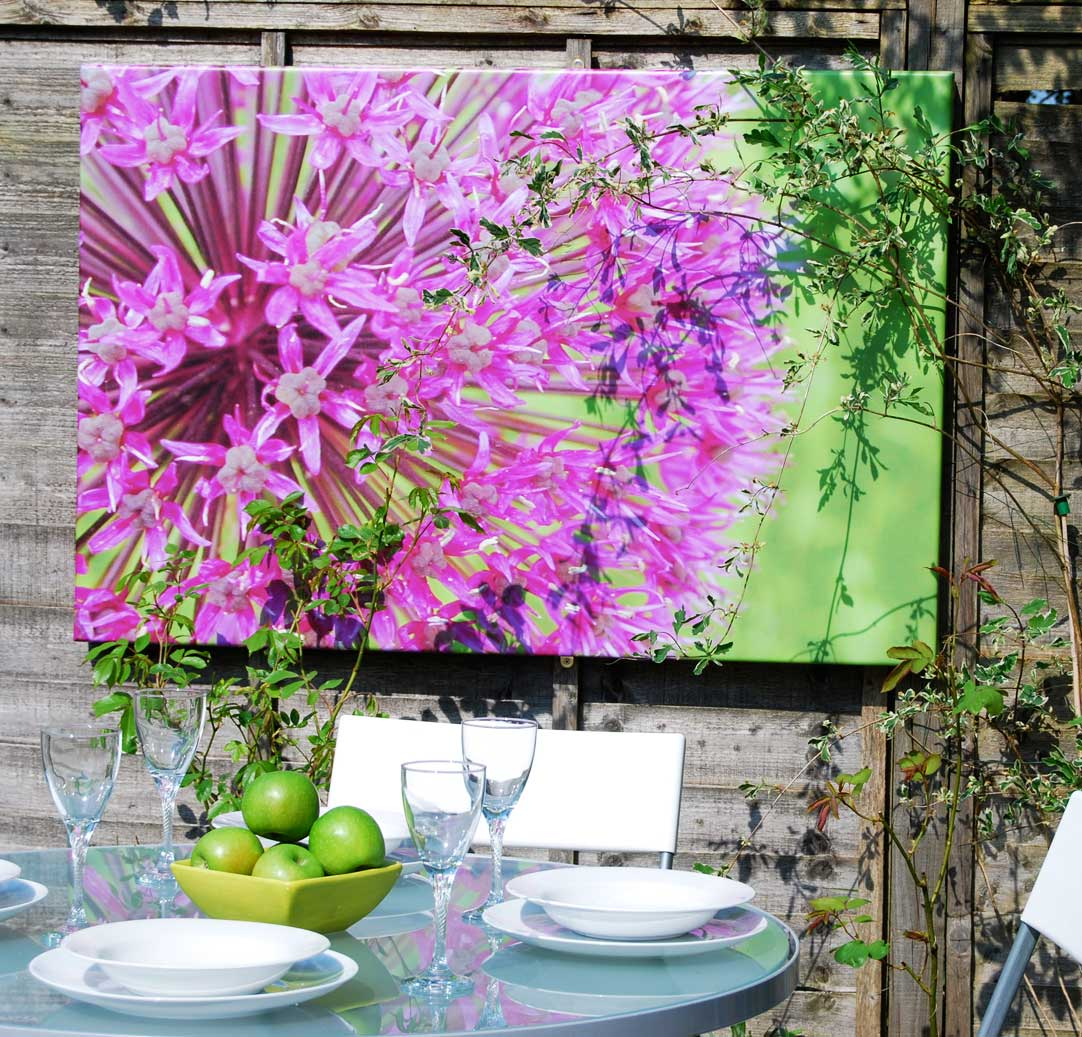 This picture of an allium brightens up the fence