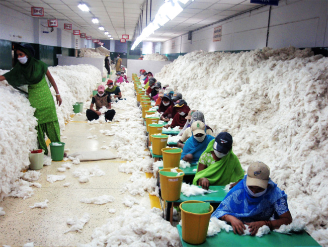 Workers in India manually decontaminating cotton (i.e. checking for pests) before processing. In Ind