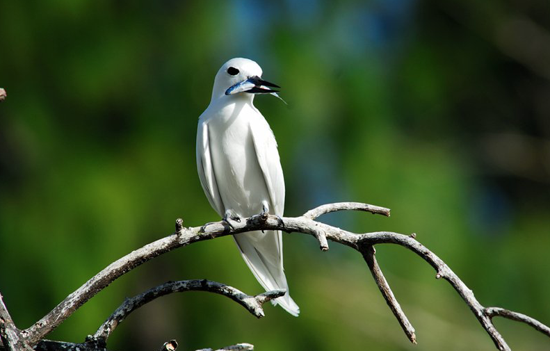 The islands are home to many species of bird