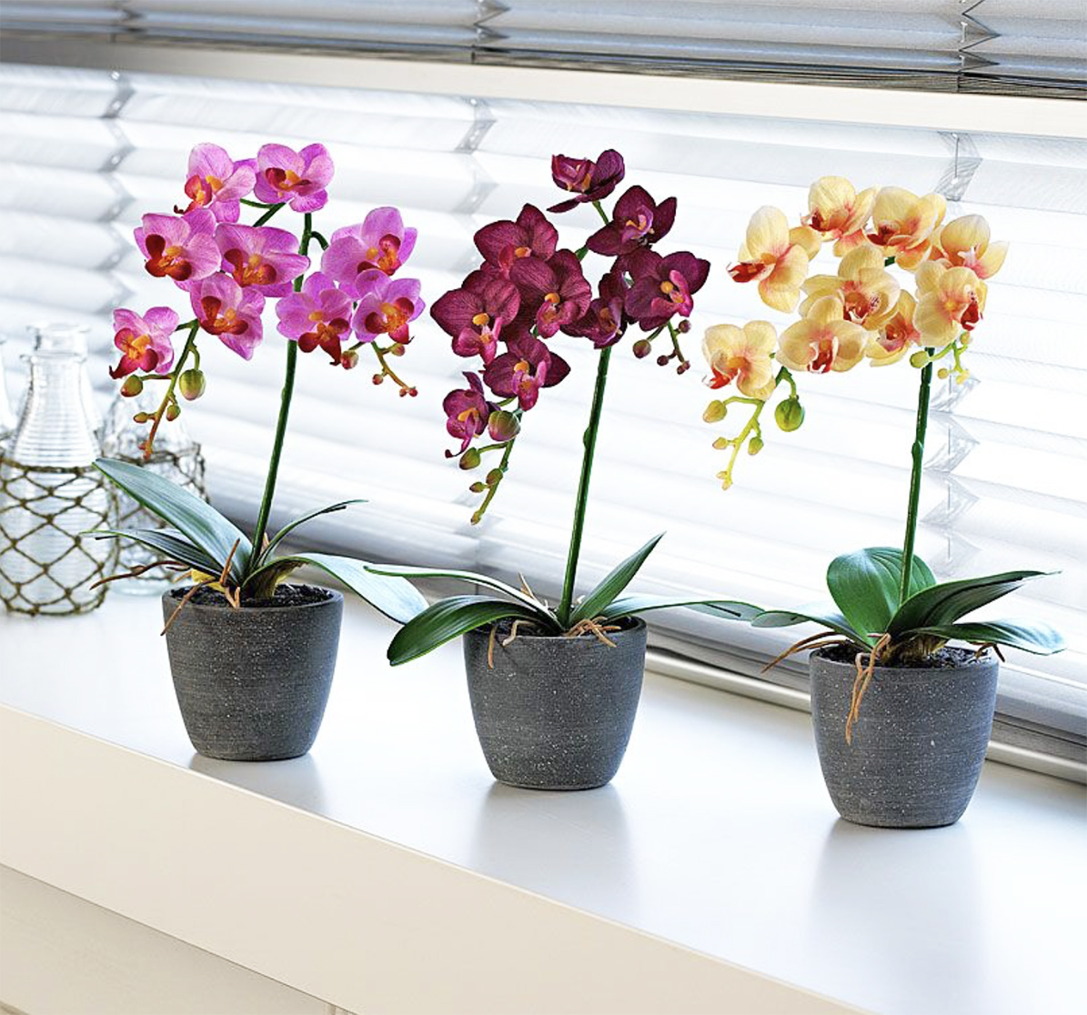 A trio of phalaenopsis brightens up a windowsill