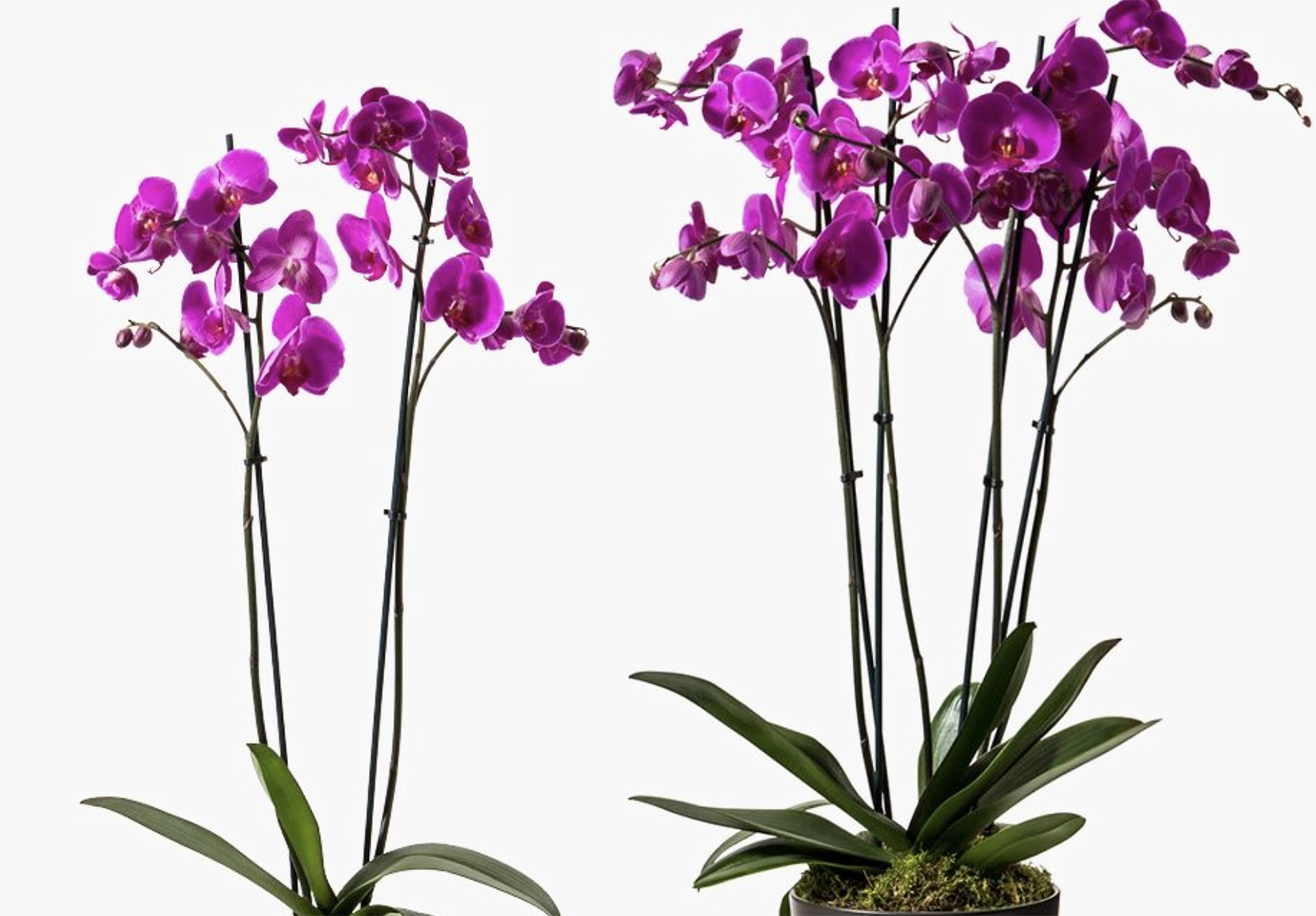 For super duper orchids try Flowerbx
