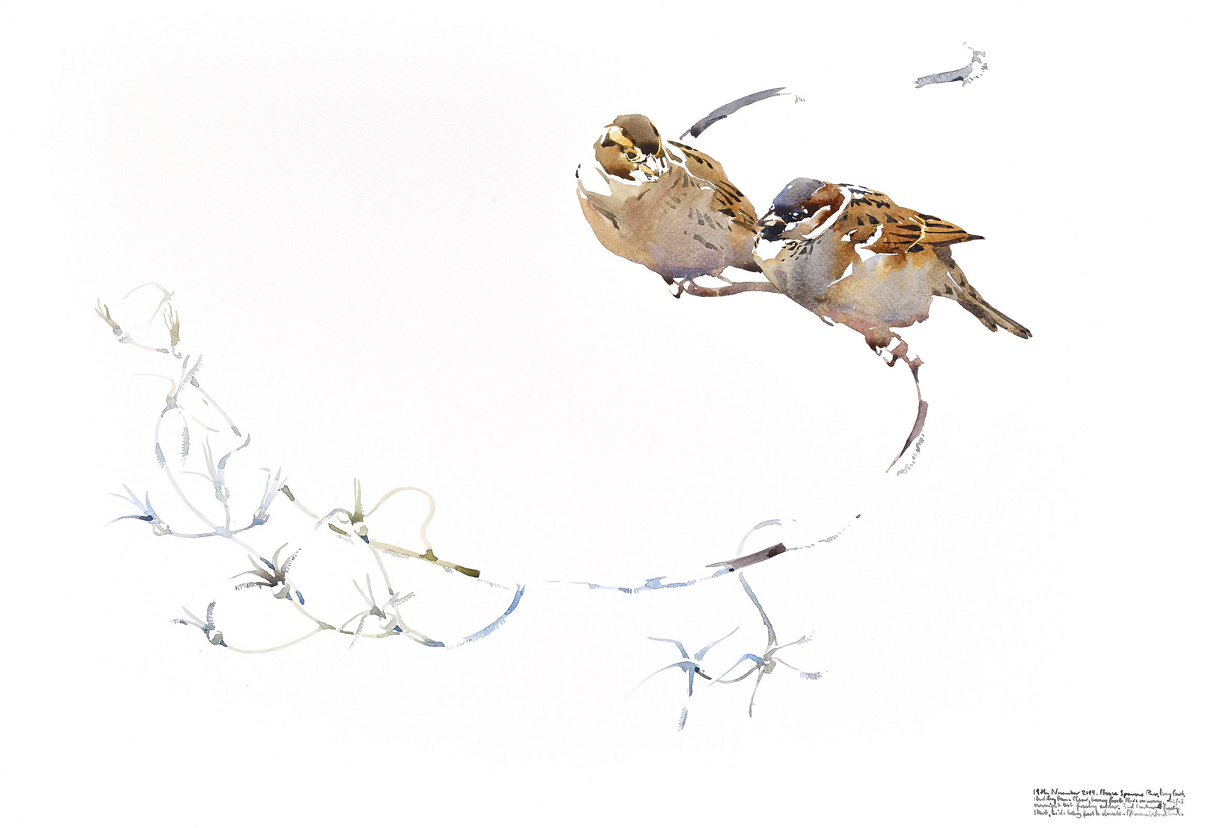 Darren Woodhead's House Sparrow Pair on Garden Twist