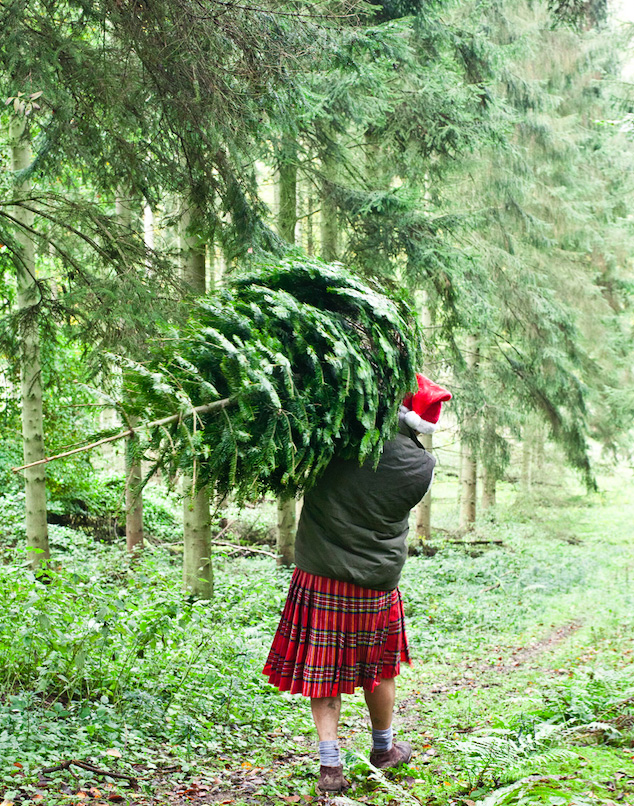 Pines And Needles grows its own Christmas trees in Scotland and plants 3 trees for each one felled