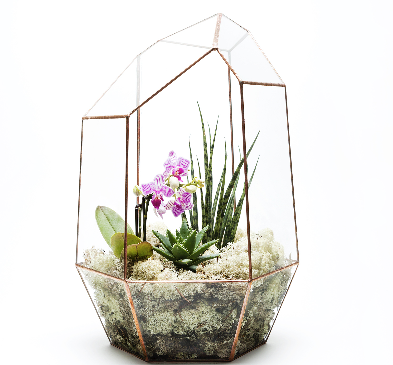 Terrarium with orchid from The Urban Botanist