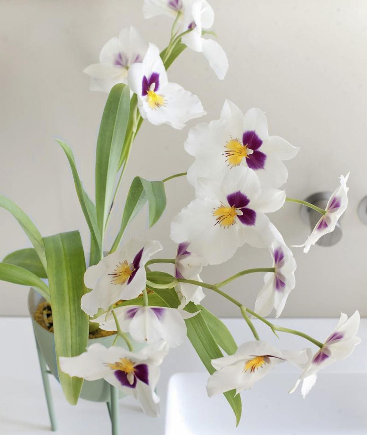 Orchids are so pretty