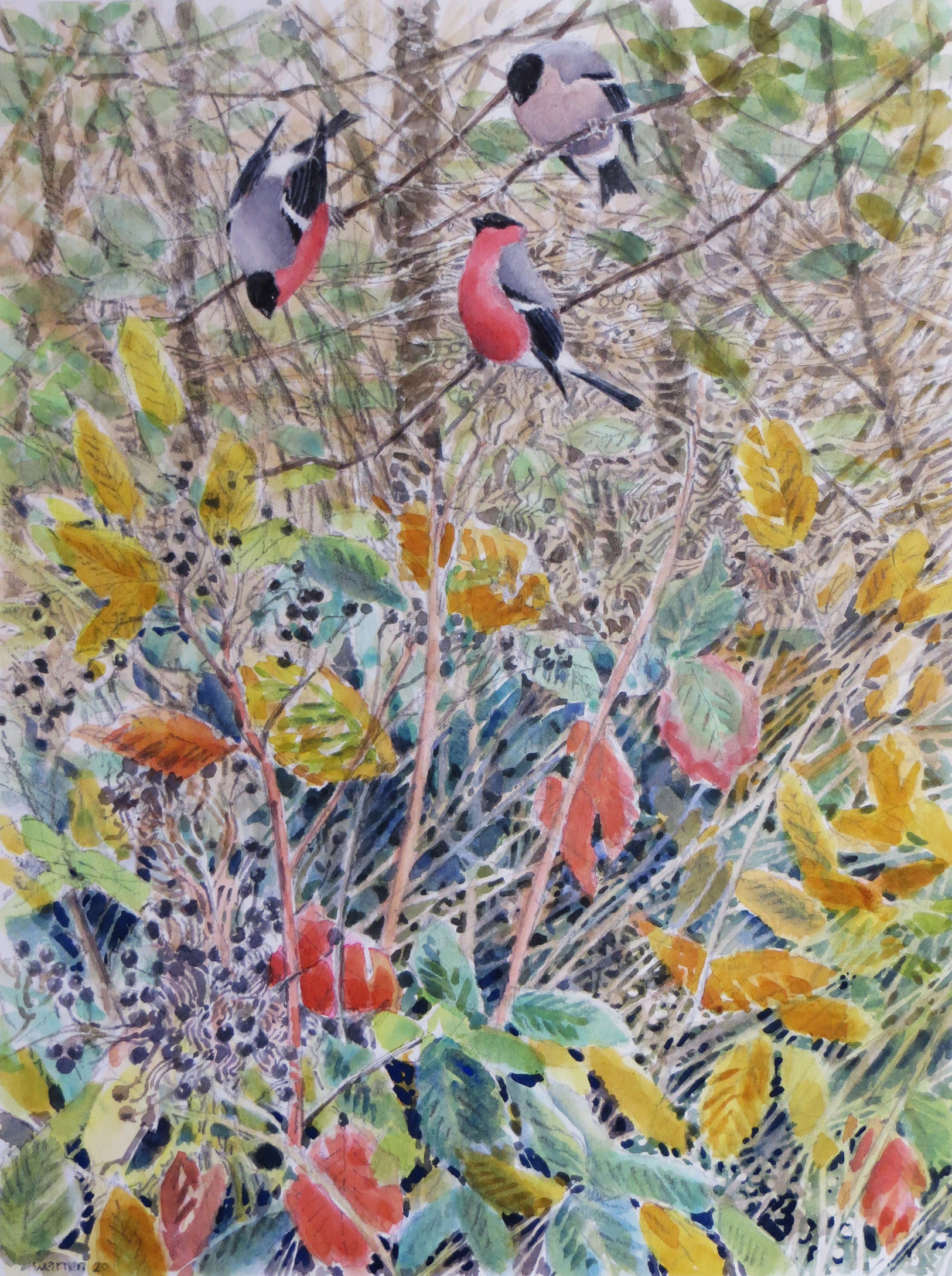 Bullfinches by Michael Warren