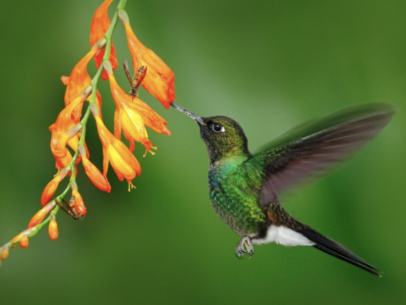 Colombia is a paradise for bird watchers