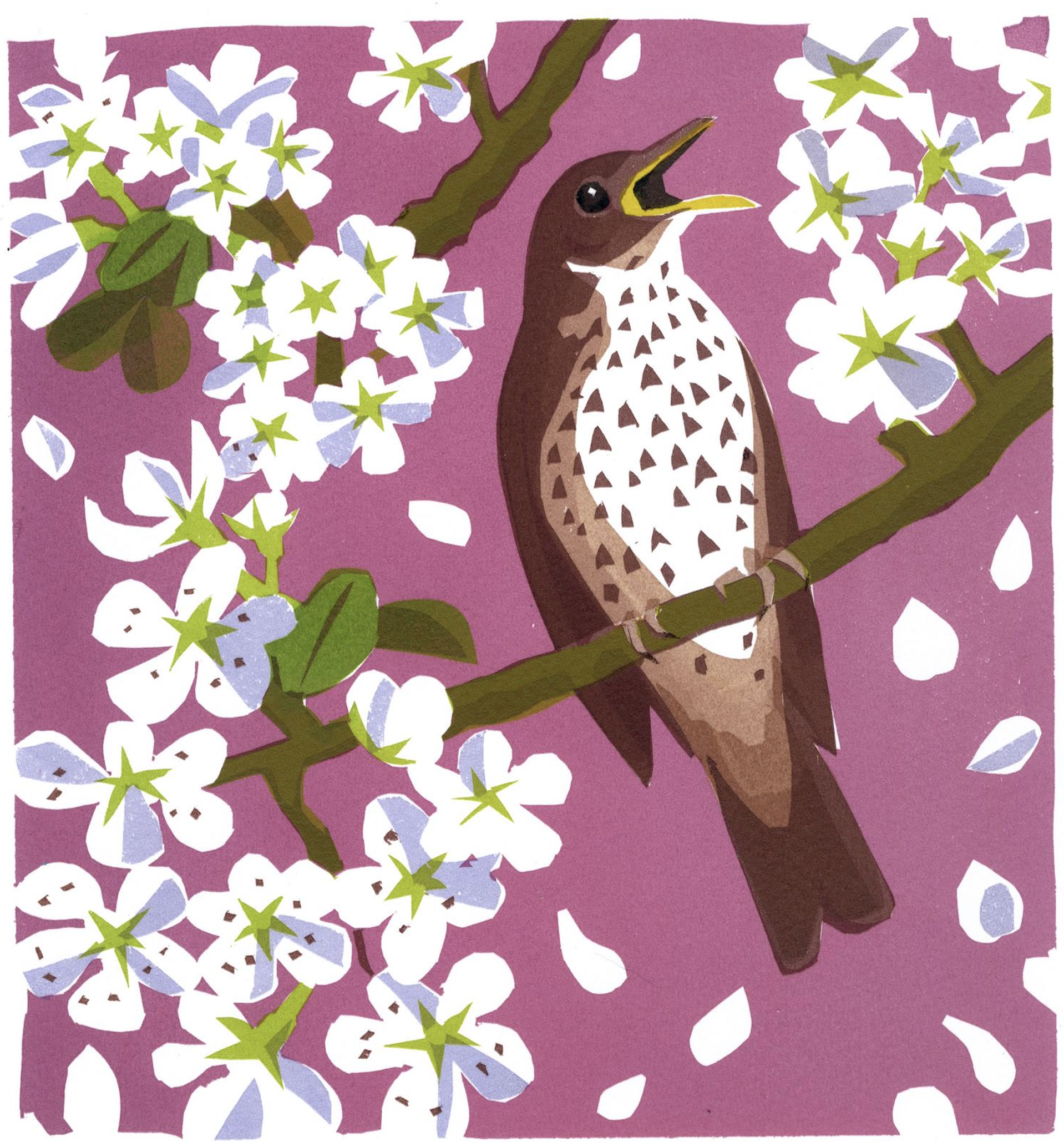 carrie akroyd song thrush blossom