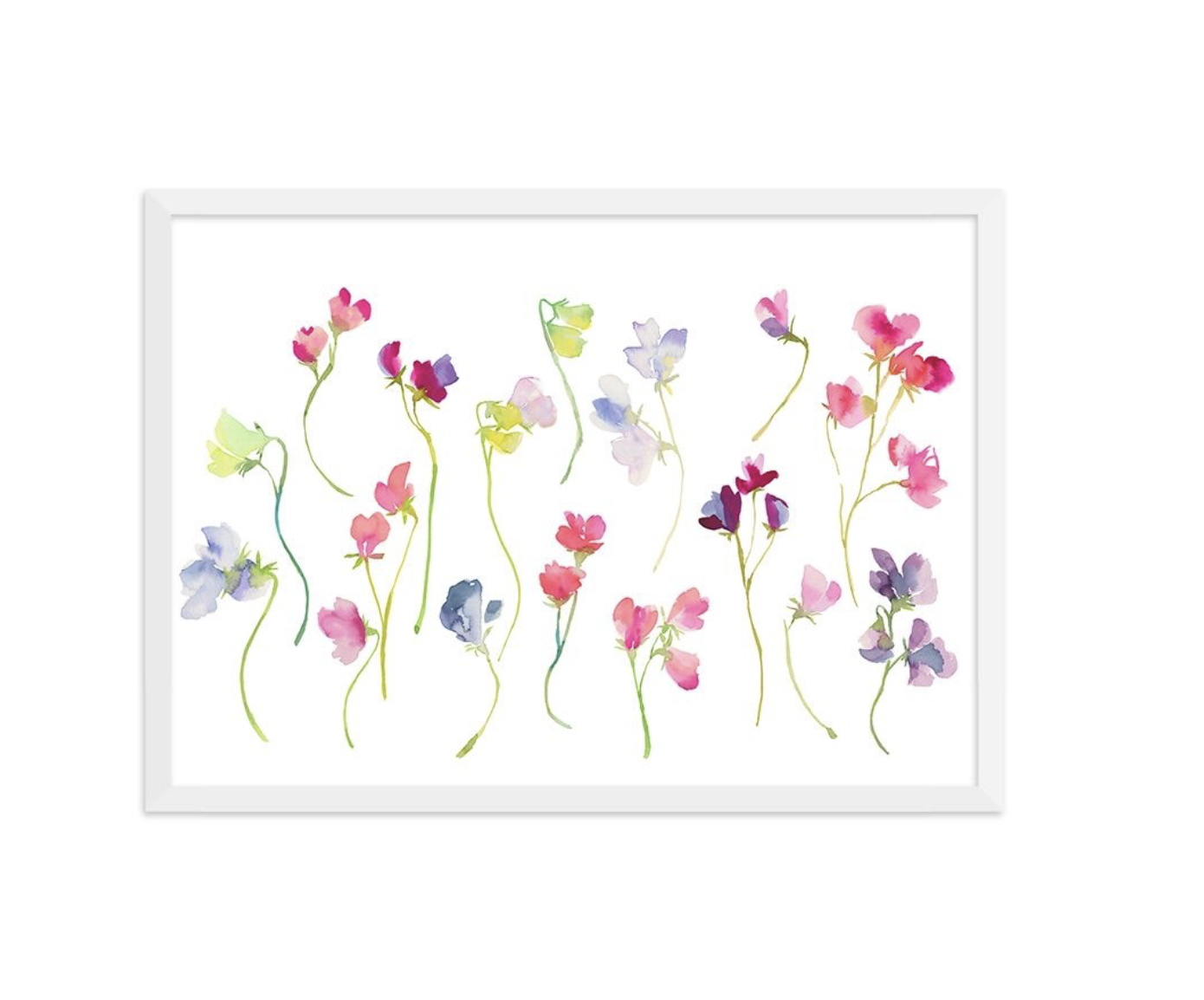 A pretty picture for the wall, Sweet Pea drawn by Fi, £40 from bluebellgray.com