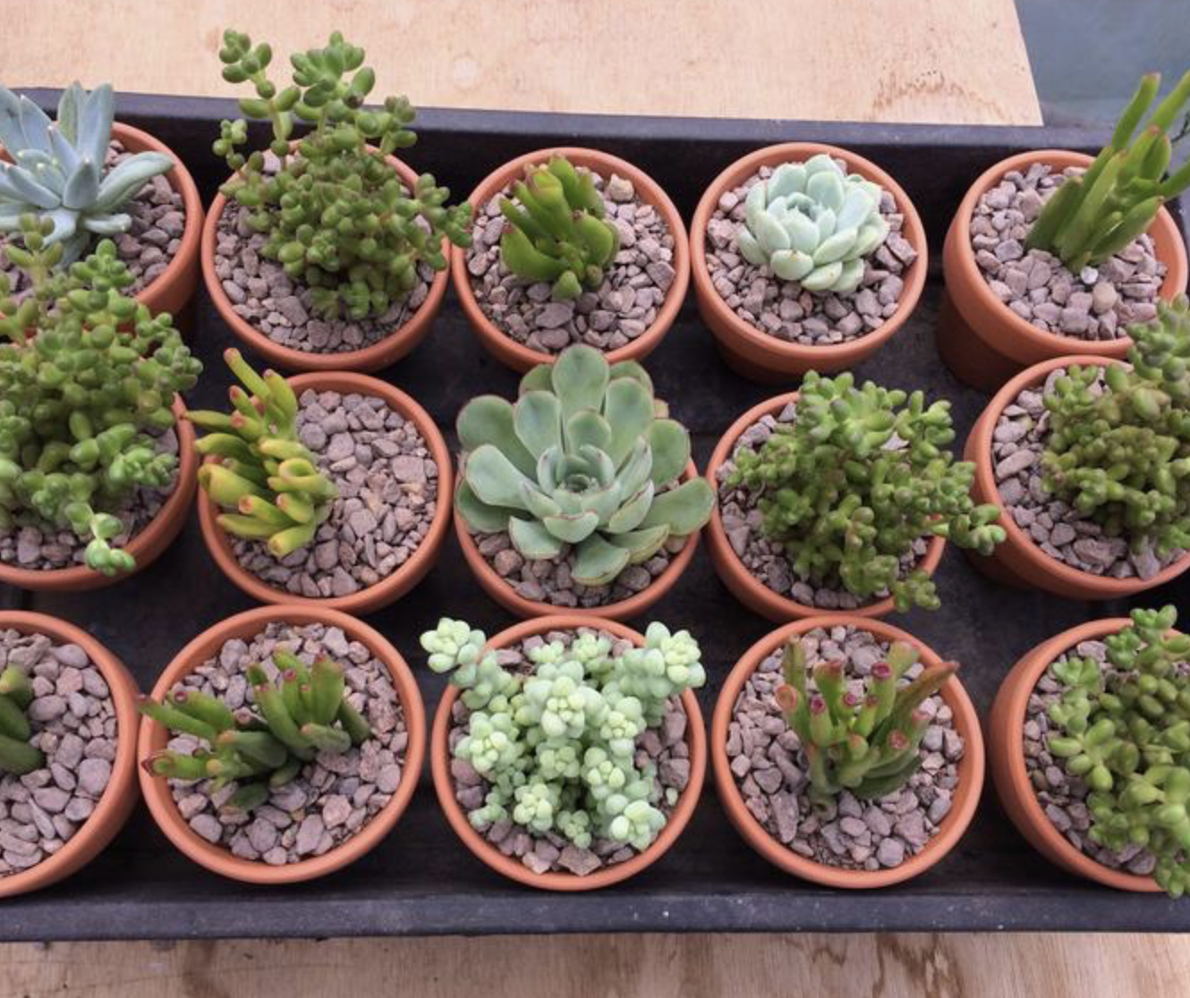 Have a group of mini succulents for impact. 15 mini plants £56.75 from blueleaf plants' etsy shop
