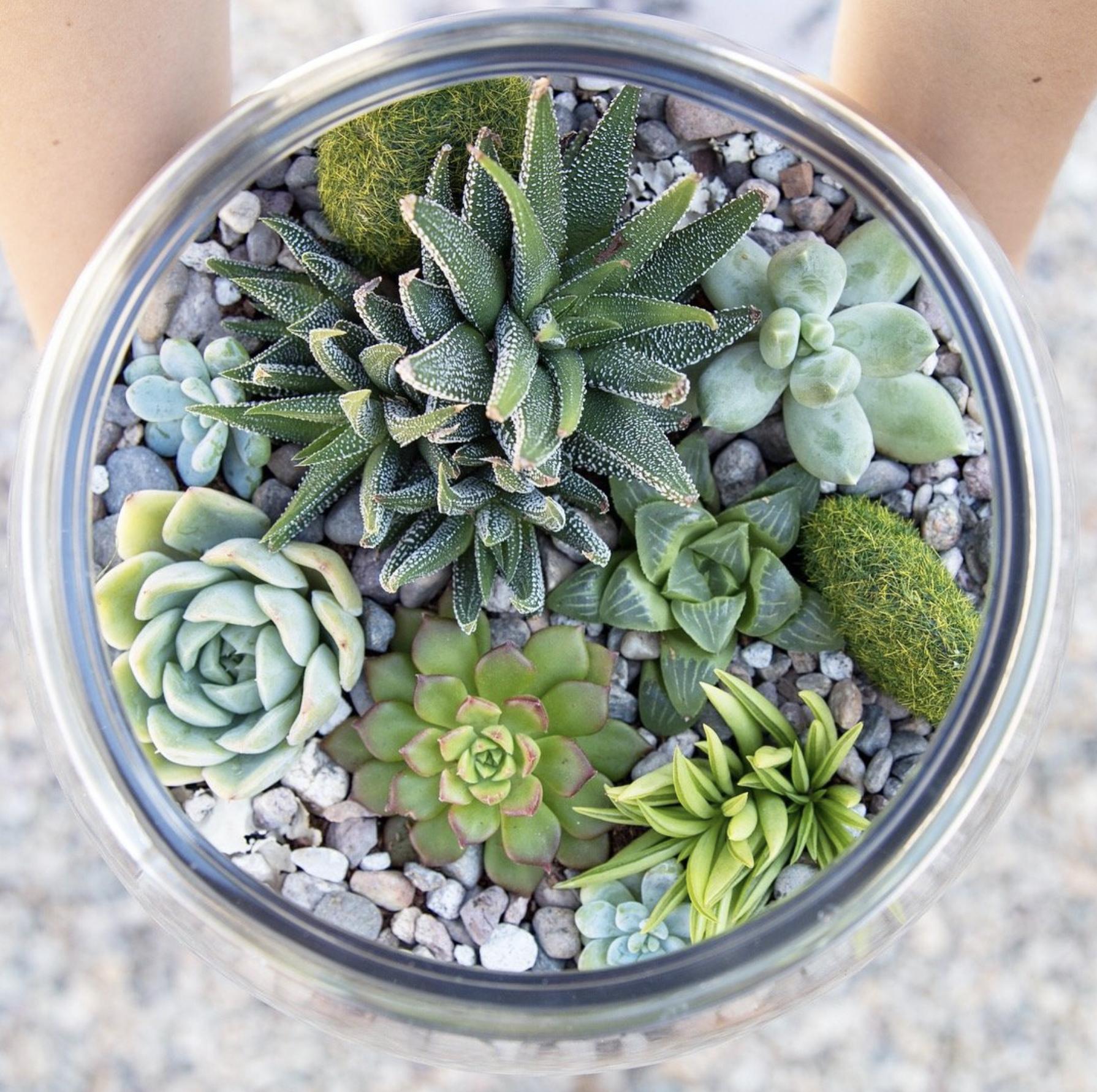 Make a terrarium with succulents