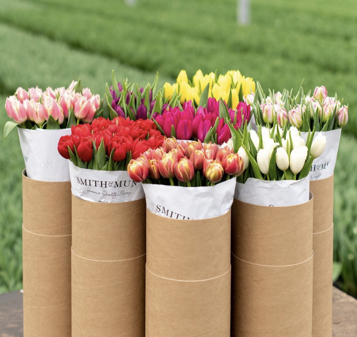British grown tulips by post from Smith & Munson, from £20 a tube