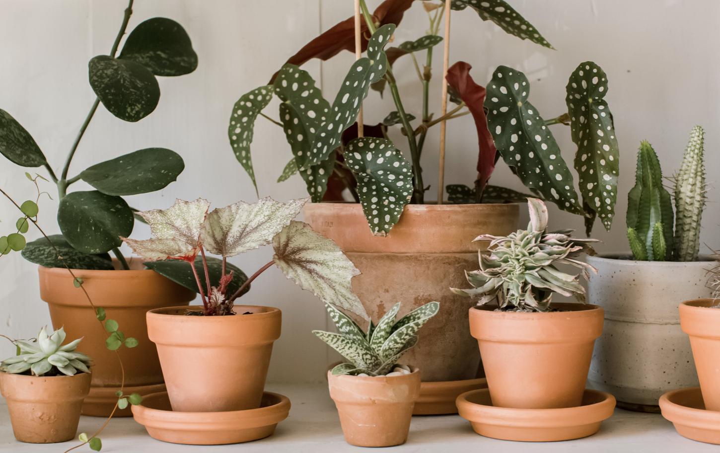 keep plants healthy with care and attention