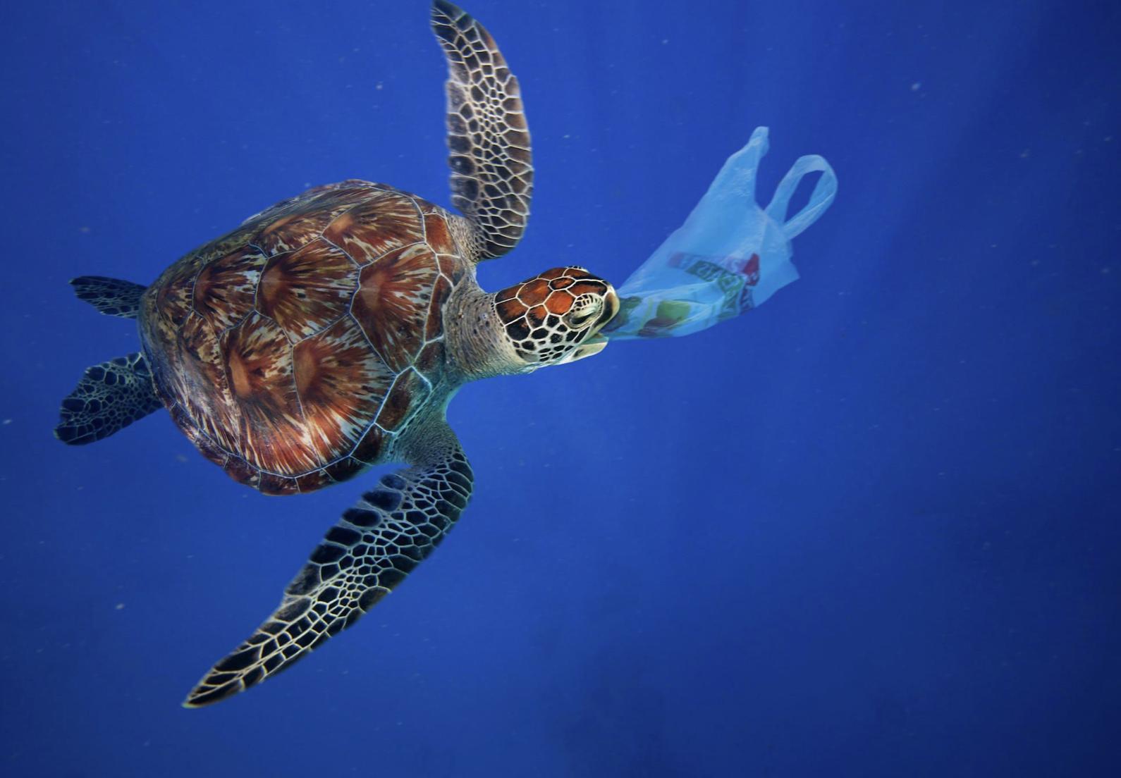 Ocean plastic is killing sealife