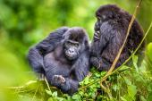 Photograph by Marcus Westburg, Kahuzi-Biega National Park in the Democratic Republic of Congo