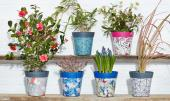 New Zen Botanics plant pots from UK brand Hum