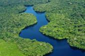 Rainforest deforestation is an environmental disaster