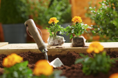Saying goodbye to peat and polystyrene, B&Q is revolutionising plant selling