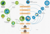 A circular economy model by the Ellen McArthur Foundation
