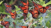 Count the butterflies in your garden
