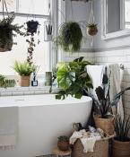 Bathroom with greenery, Dobbies
