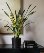 Orchid from Flowerbx