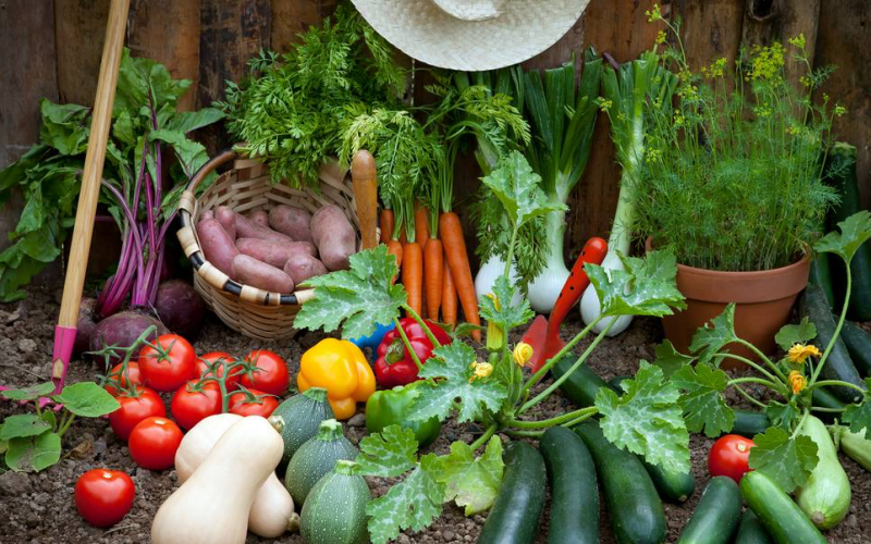 Grow fruit and veg at home in containers