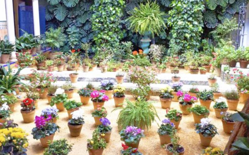 lots of plants in pots bring outside space to life