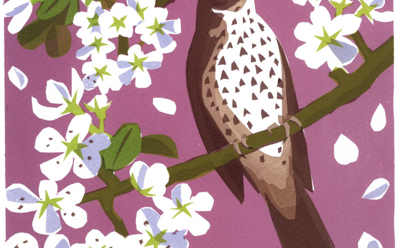 carrie akroyd song thrush blossom