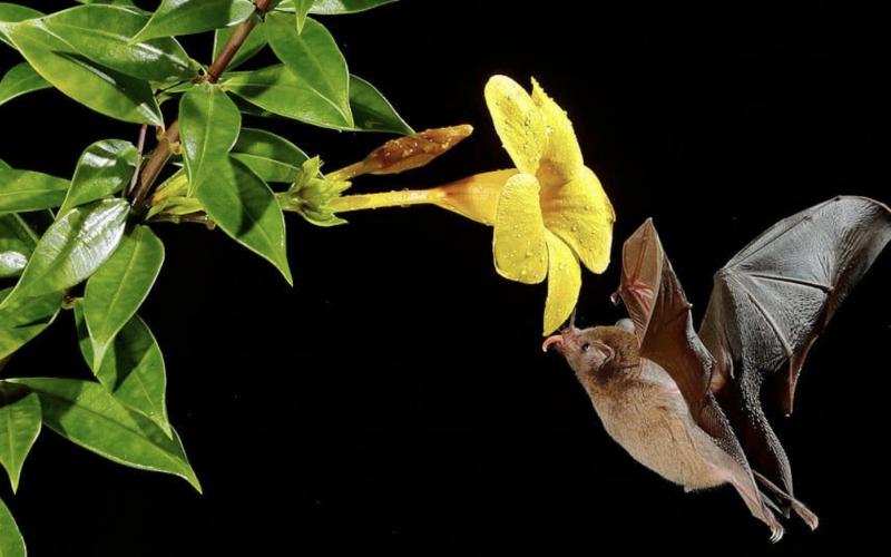 Encourage bats to your garden