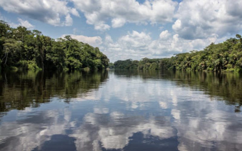gabon has reduced emissions from forestry activity
