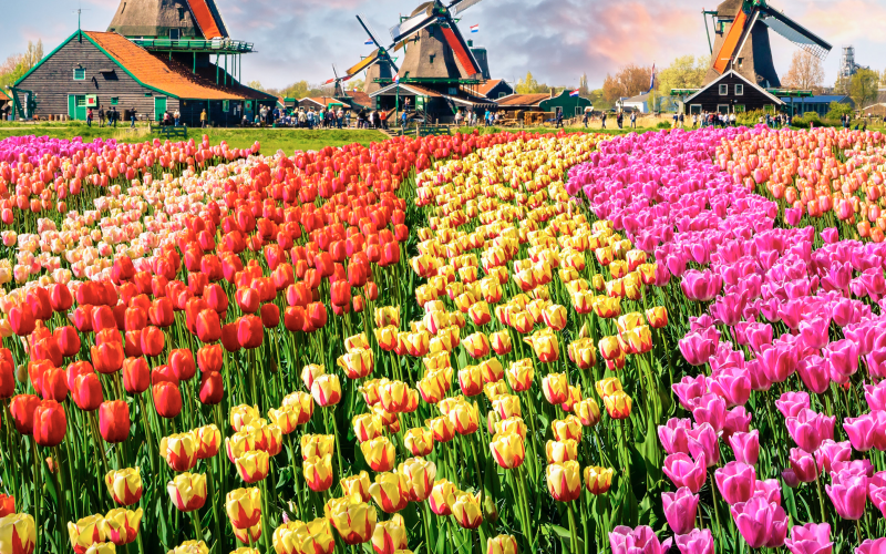 Floriade Exp 2022, tradition and innovation in horticulture