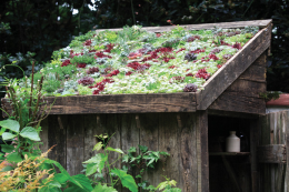 You can use succulents on a green roof on a shed or garden room