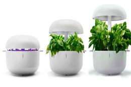 Plantui 6 indoor hydroponic system for growing salad and herbs, £195, www.plantui.com