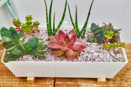 A succulent metal window box planter