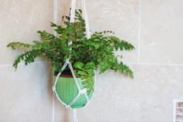 Many plants thrive in bathrooms..so why not hang one in here