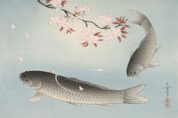 Cherry Blossom and Two Carp, Bakufu Ohno (1888-1976), original woodblock print, 1950. 26.5x38cms, £720