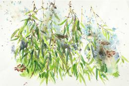 Summer Crack Willow, 28x22 in. Prints cost £105