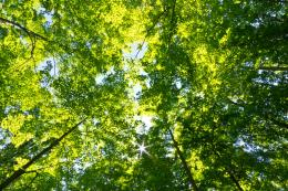 Trees from managed forests are sustainable. Biomass boilers generate heat  for homes using wood pellets