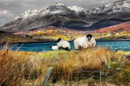 Arrival of spring,Ardhasaig, Isle of Harris