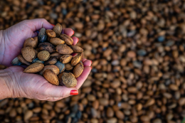 Almonds grow in Andalusia