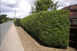 Local authorities should focus on hedges more than trees along roadsides
