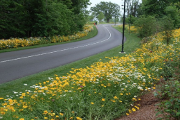 The hedge has it when it comes to roadside pollution control