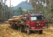 Illegal logging destroys habitats for many species of birds and animals and damages the environment