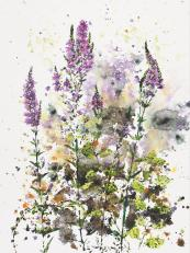Purple Loosestrife, 22x28 in. Prints cost £105